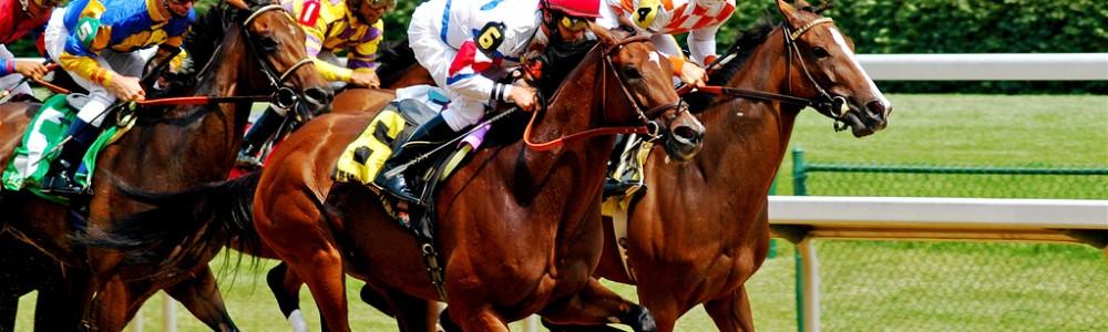 Keeneland Dan Professional Horse Racing Handicapper
